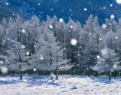 霧氷と雪CG