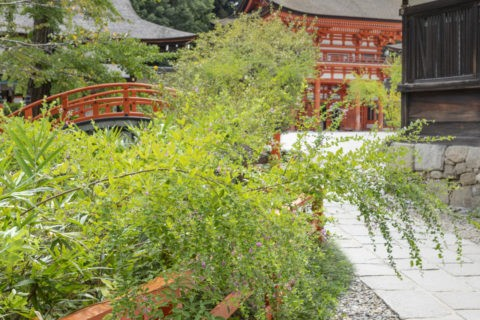 下鴨神社 萩と楼門