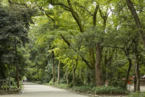 下鴨神社 糺の森参道