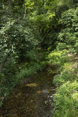 下鴨神社 糺の森 泉川