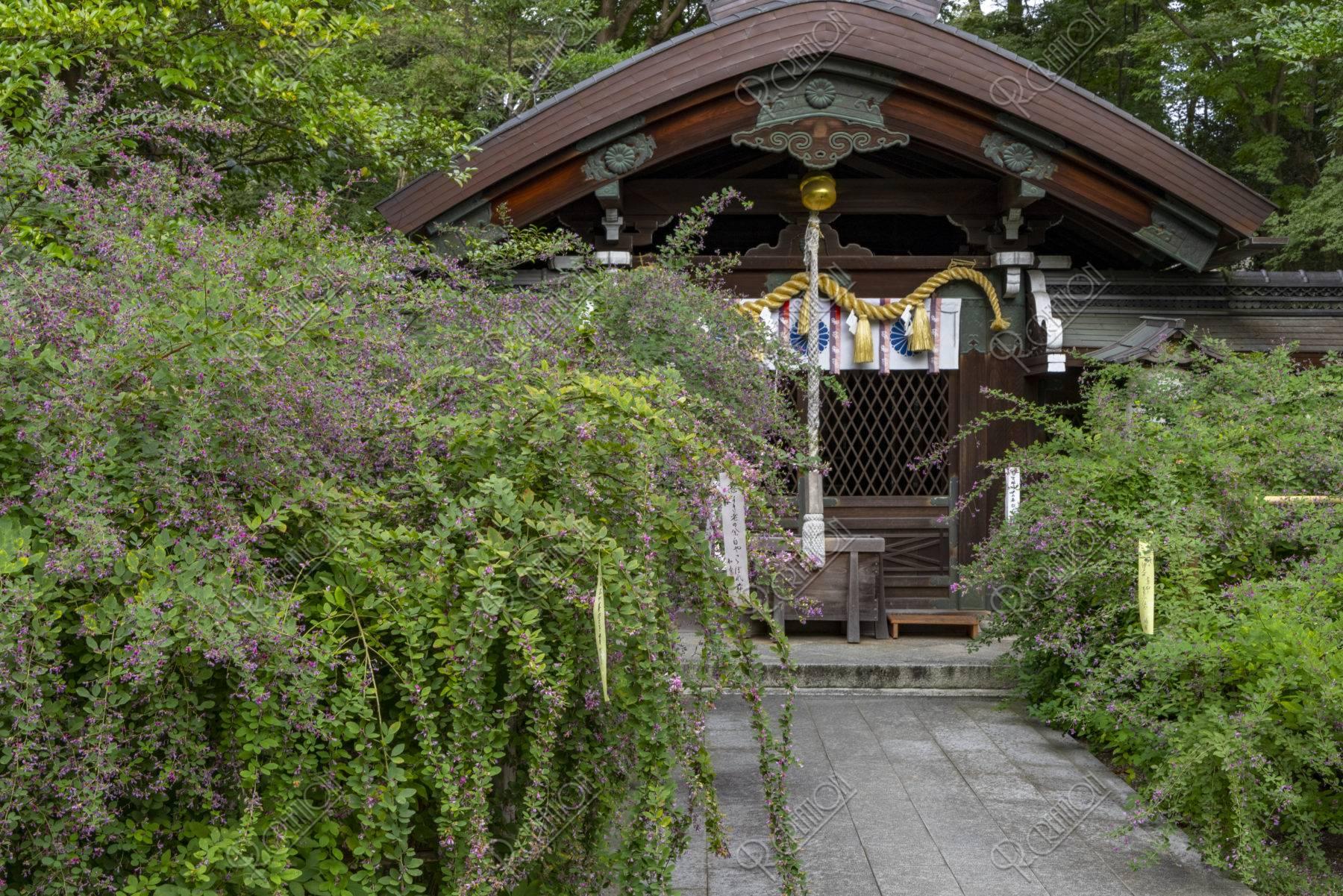 萩の花咲く 梨木神社