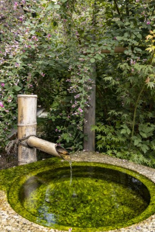 萩と手水鉢