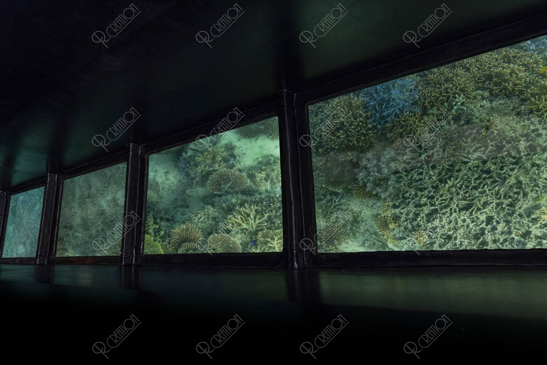 川平湾 グラスボート