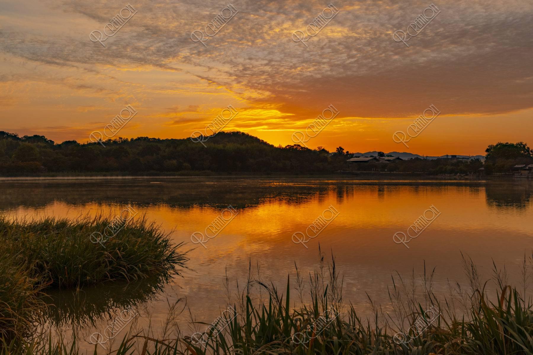広沢池の朝焼け