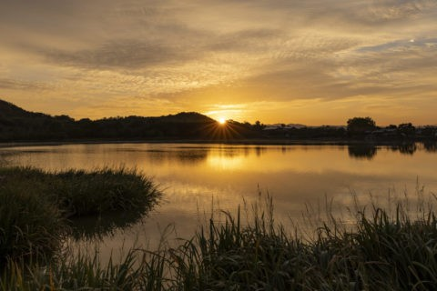 広沢池と朝日