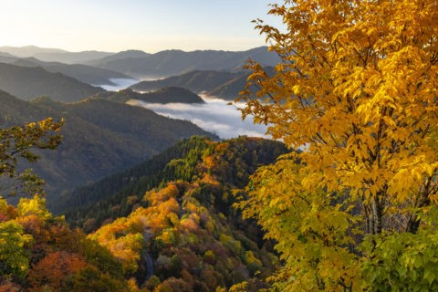 おにゅう峠 黄葉と雲海
