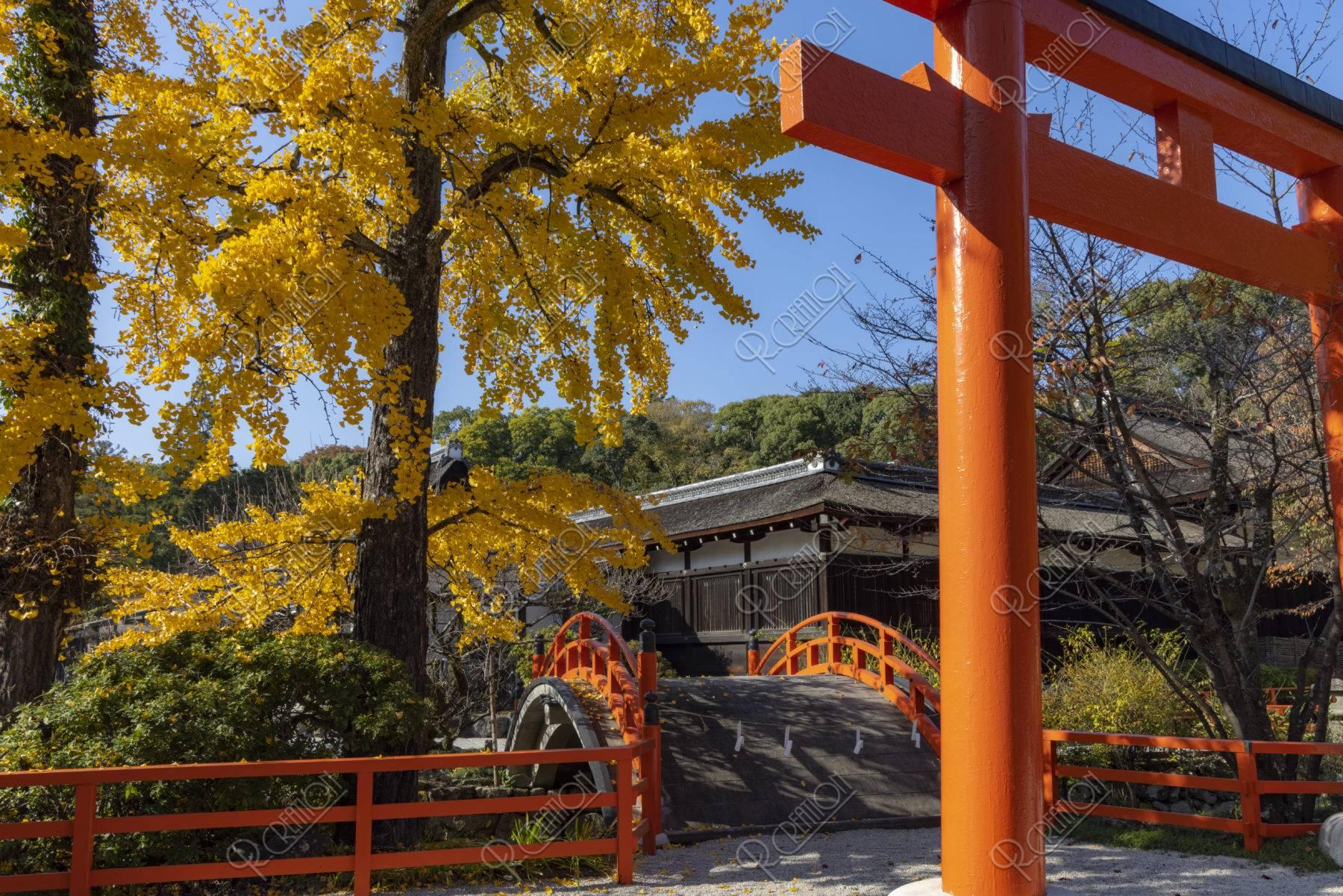 下鴨神社 鳥居と銀杏