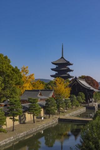 東寺と銀杏