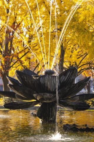 ハス型の噴水と銀杏