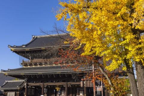 東本願寺御影堂門と銀杏