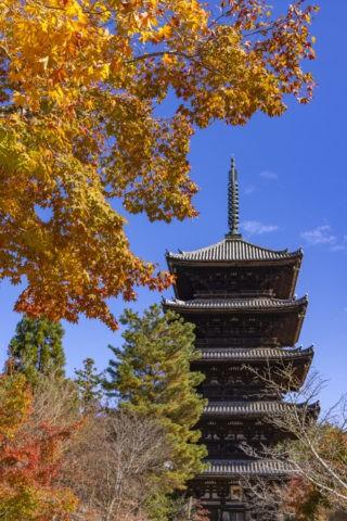 仁和寺五重塔と紅葉