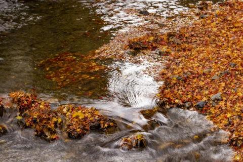 川と紅葉の落葉