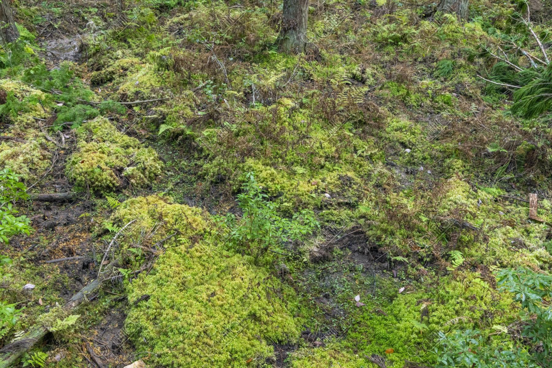 水苔の群生地