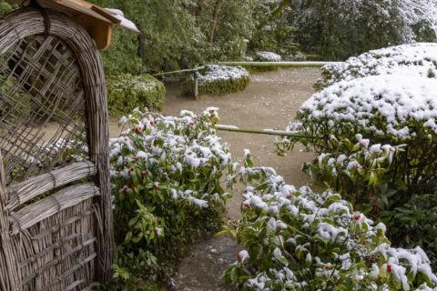 雪の詩仙堂 袖垣