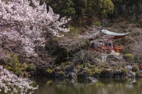 醍醐寺 弁天堂 桜