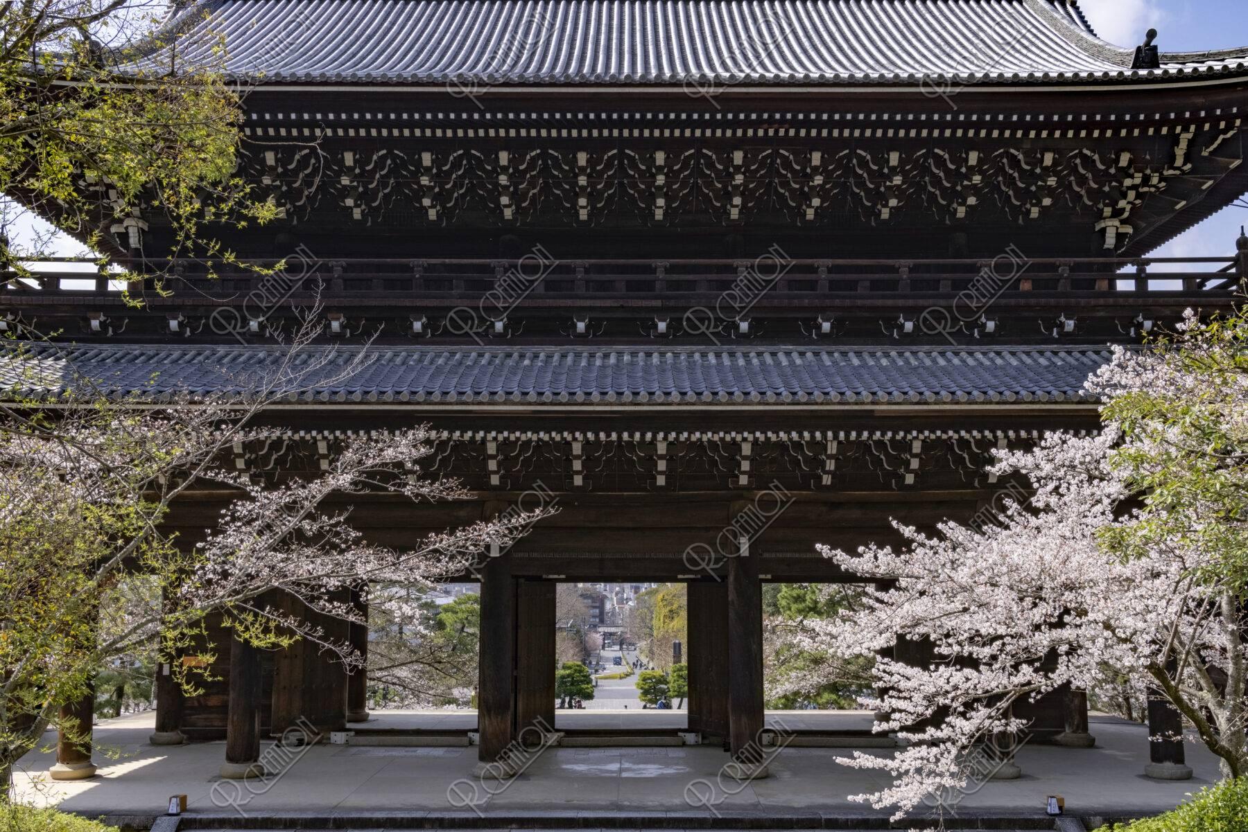 知恩院 三門と桜