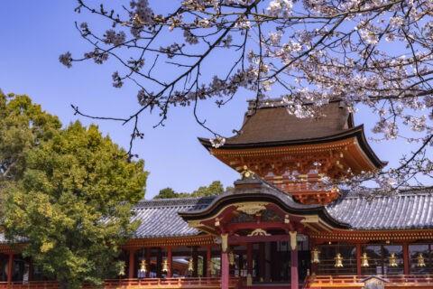 石清水八幡宮本社 桜