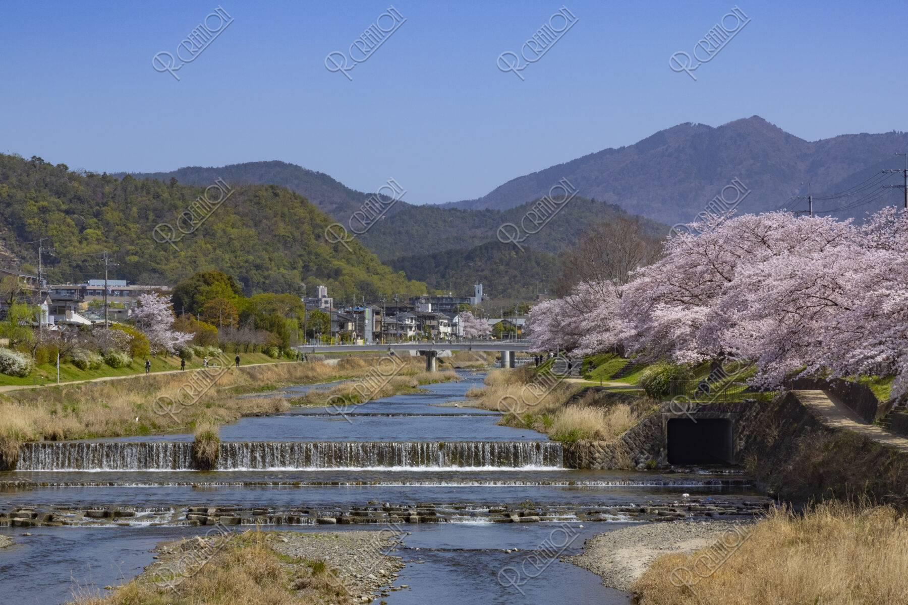 高野橋からの比叡山と桜並木