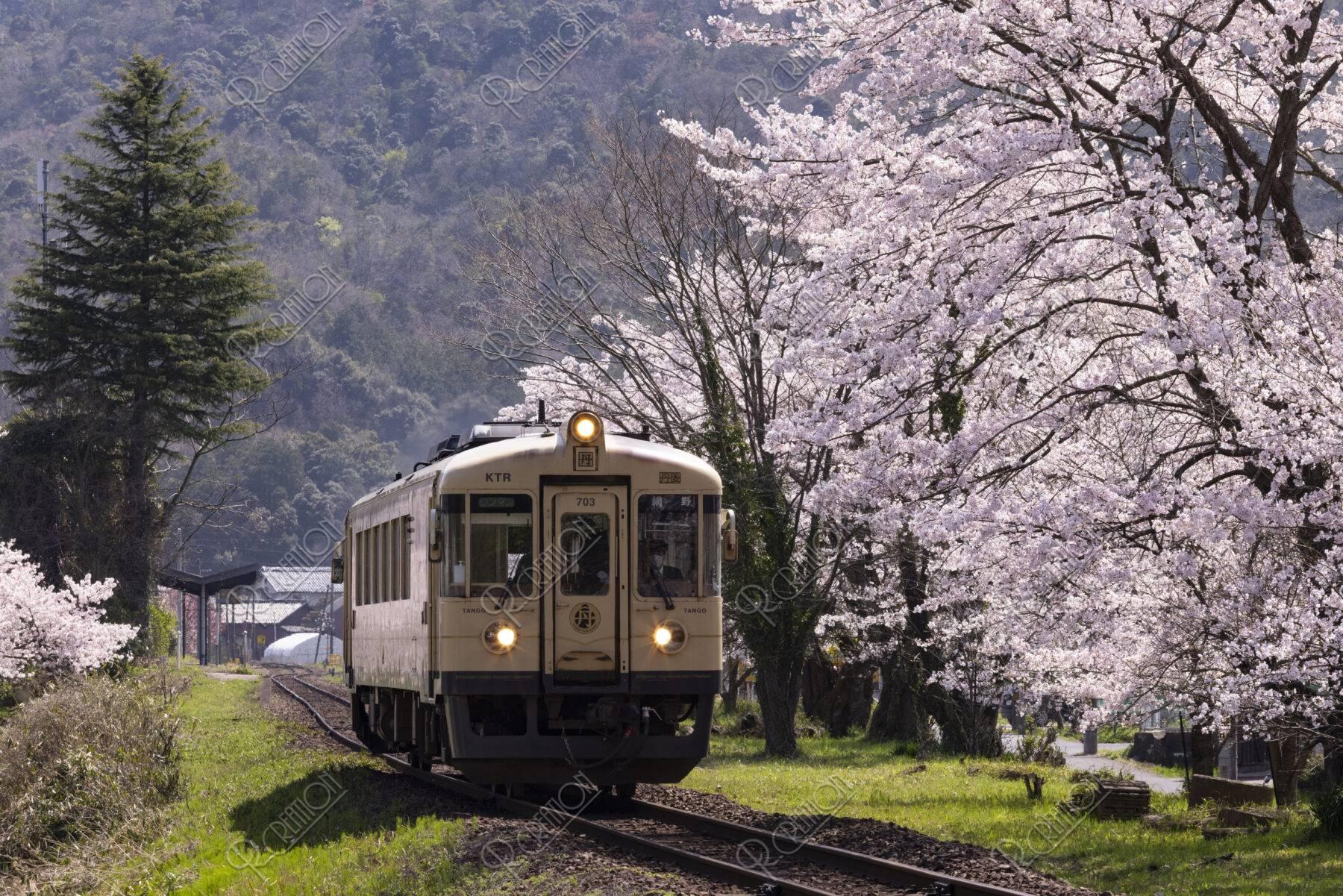 京都丹後鉄道と桜
