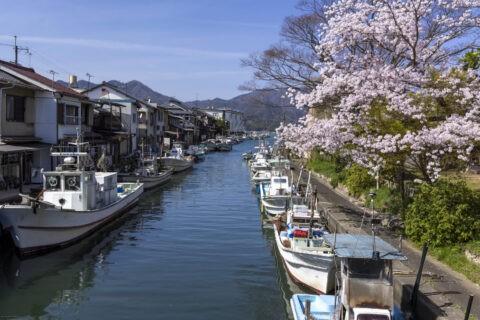 吉原漁港と桜
