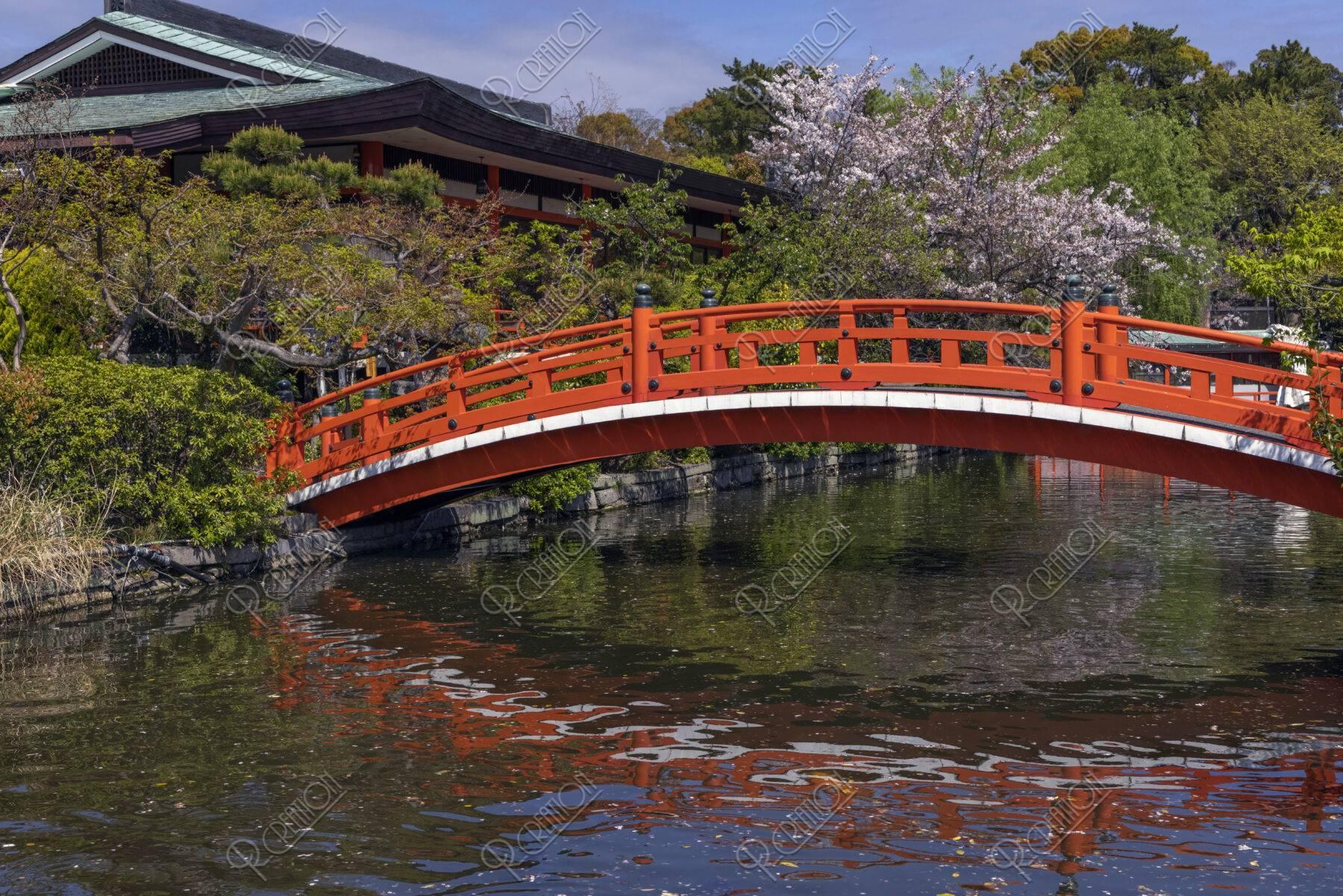 神泉苑 法成橋と桜