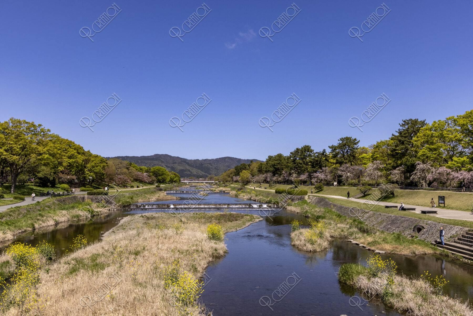 北大路橋からの新緑の賀茂川