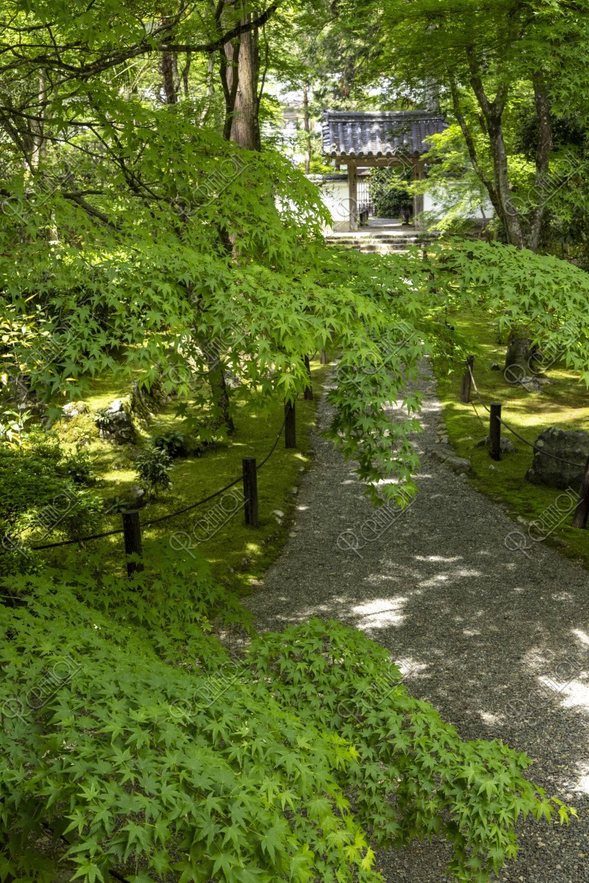 新緑の地蔵院参道