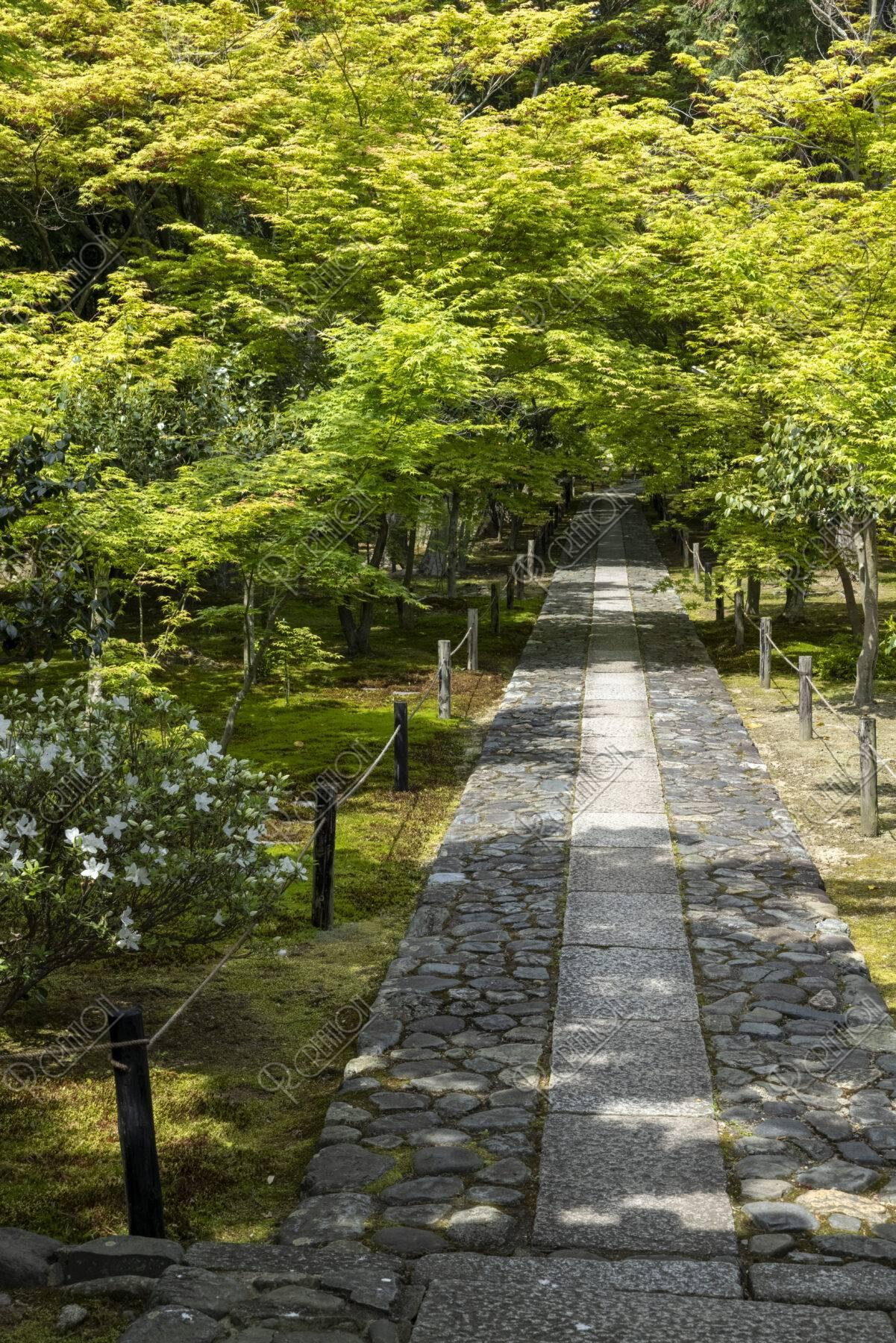 鹿王院 新緑の参道