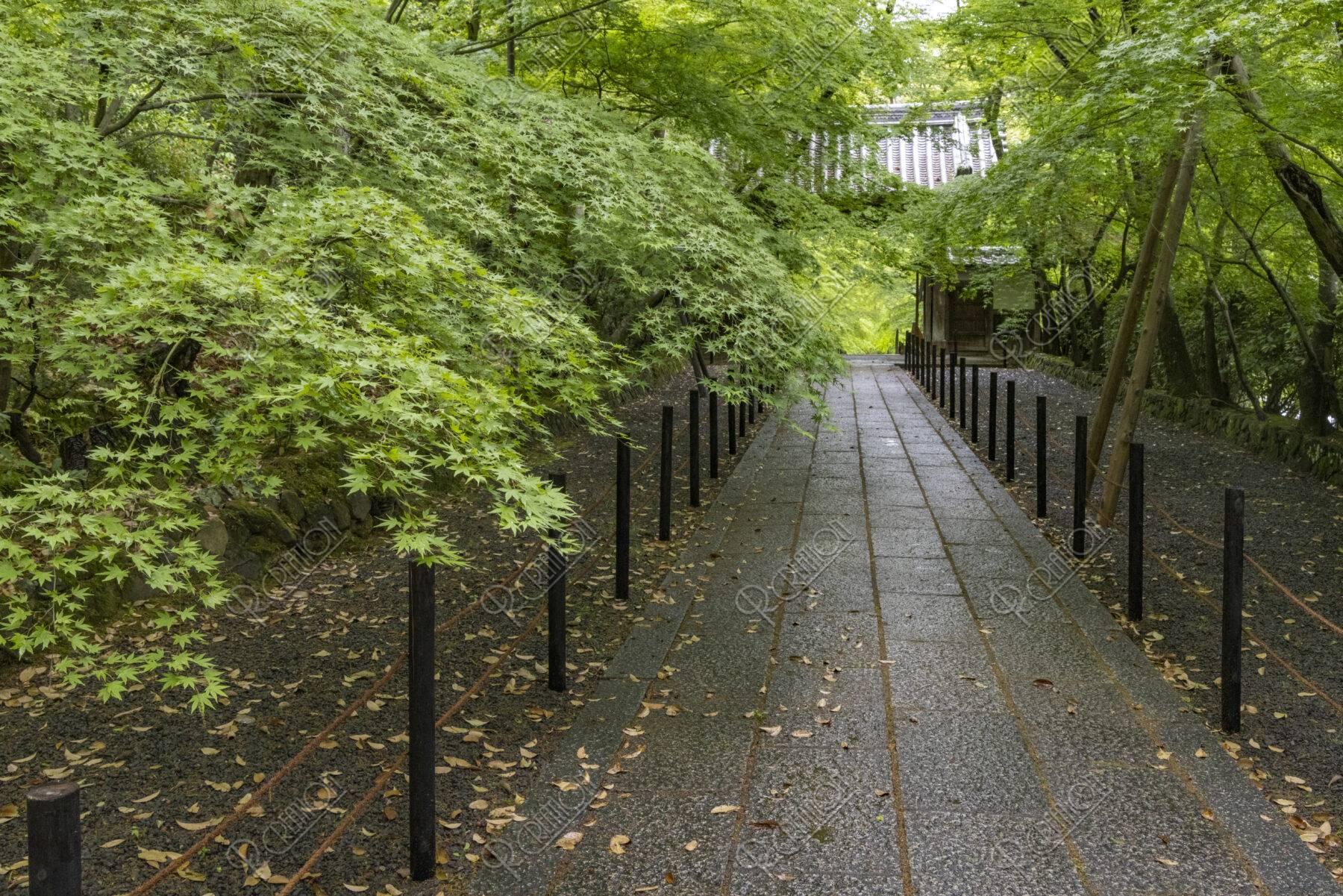 光明寺 新緑の参道