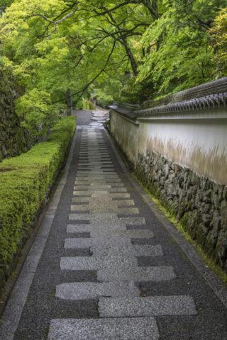 善峯寺 新緑の参道