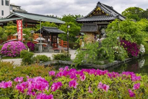 ツツジ咲く神泉苑