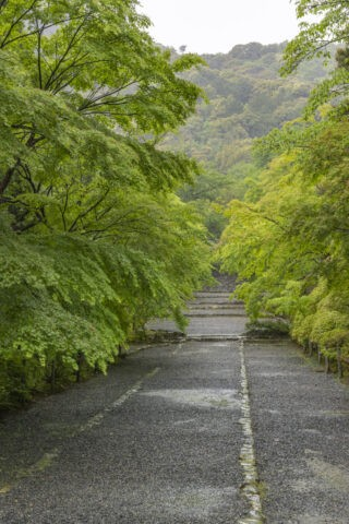 新緑の二尊院参道