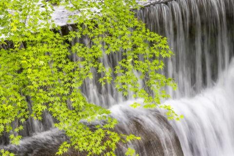 貴船川と新緑