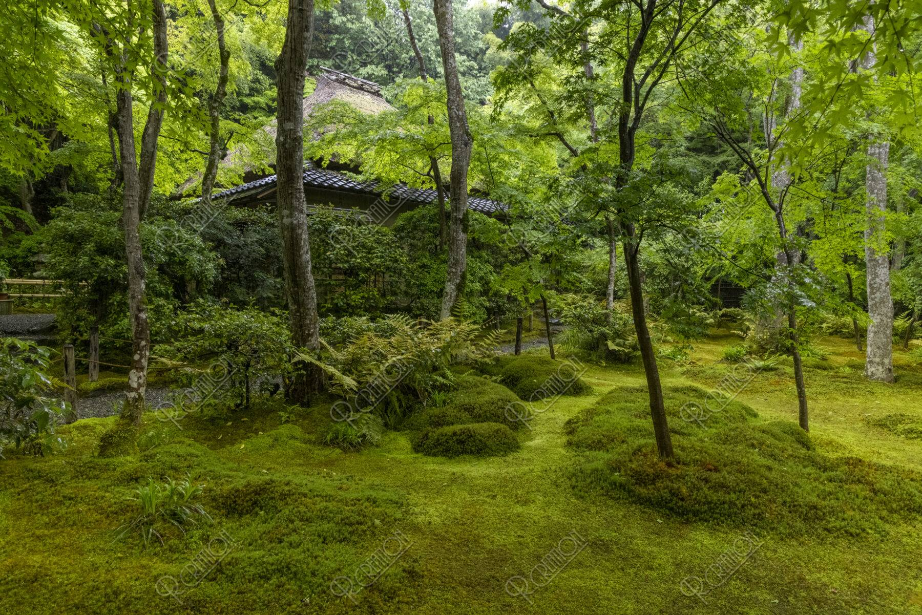 新緑の祇王寺