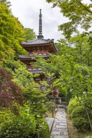 三室戸寺 三重塔
