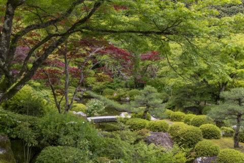 三室戸寺 庭園