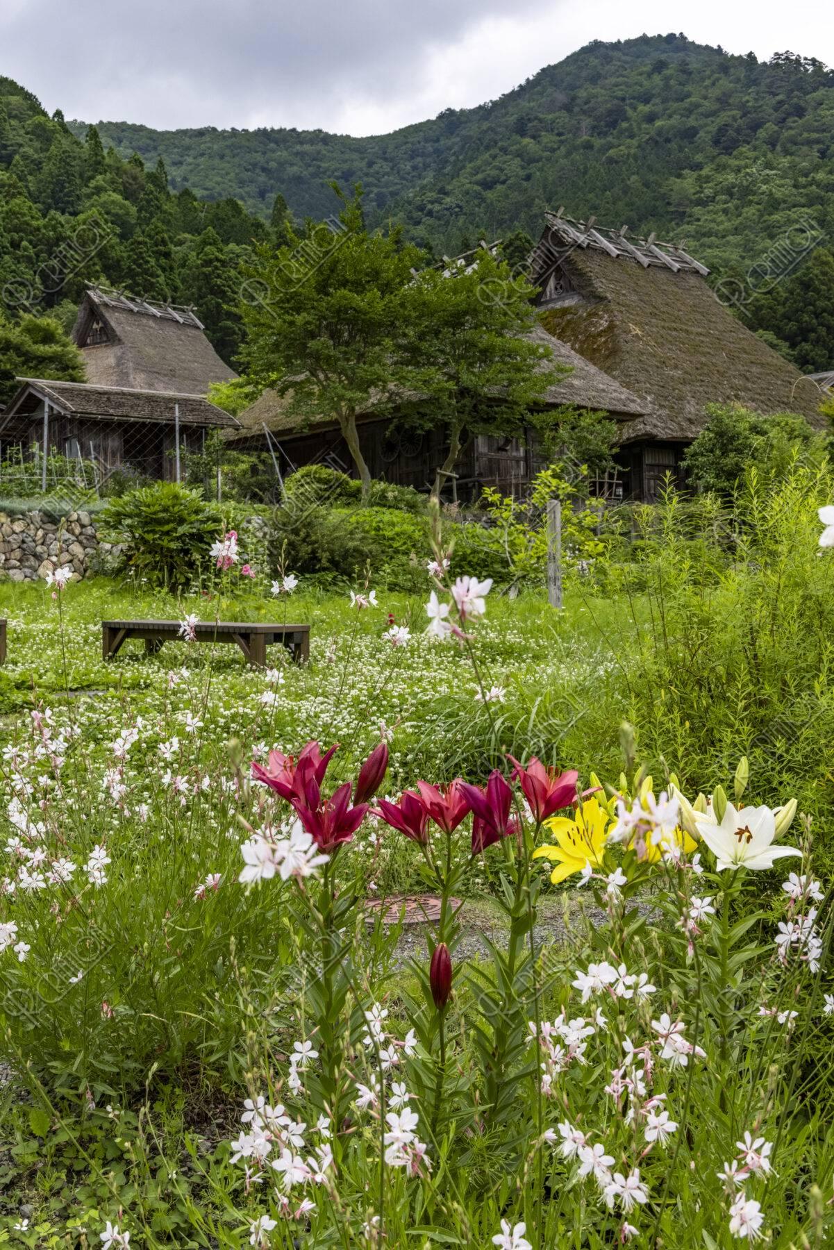 ユリ咲く美山かやぶきの里