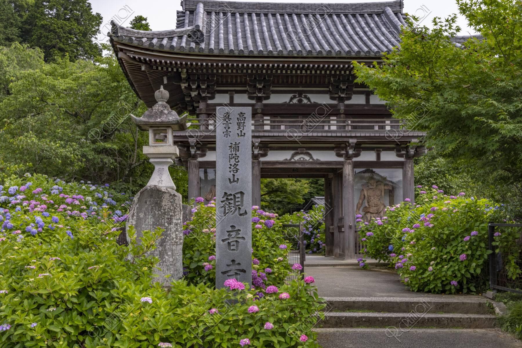 観音寺 山門とアジサイ