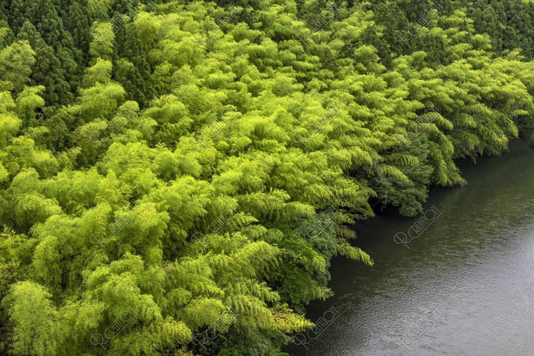 由良川と竹林