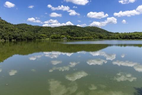 真夏の広沢池