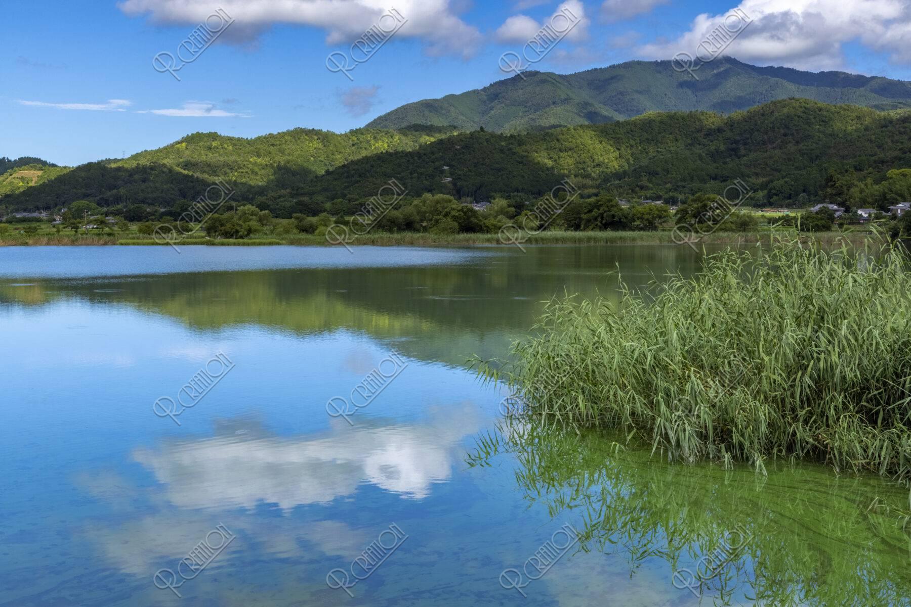 夏の広沢池